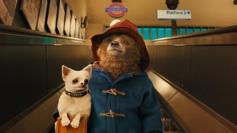Paddington-dog